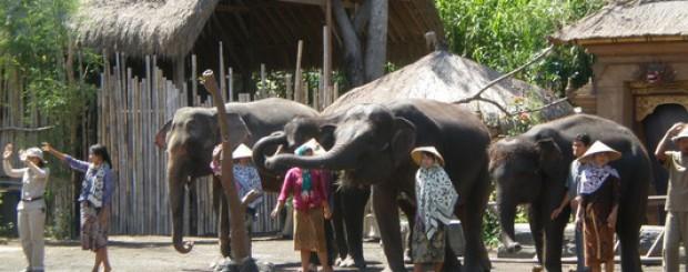 Bali safari marine park package
