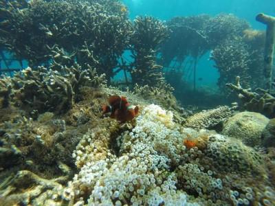 East Bali snorkeling tour